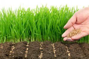 Купить газонную землю по акции 500р.м3