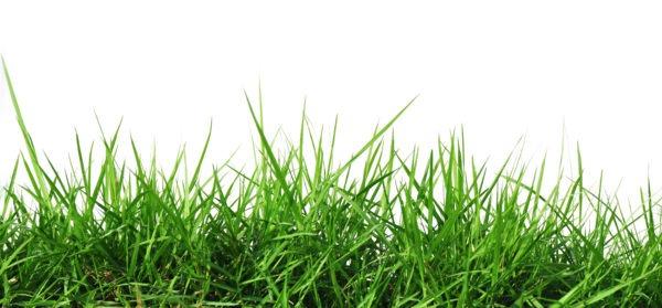 Разбивка газонов