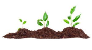 Растительный грунт для садовых растений